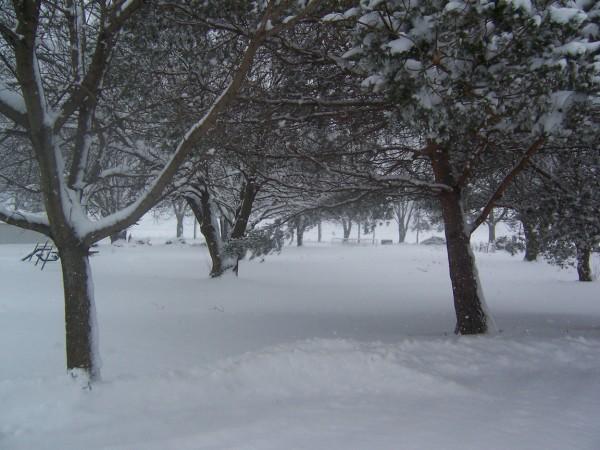 snow2 2 3 13.jpg