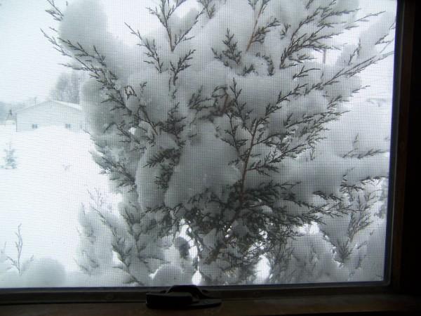 snow 1 2 9 15.jpg