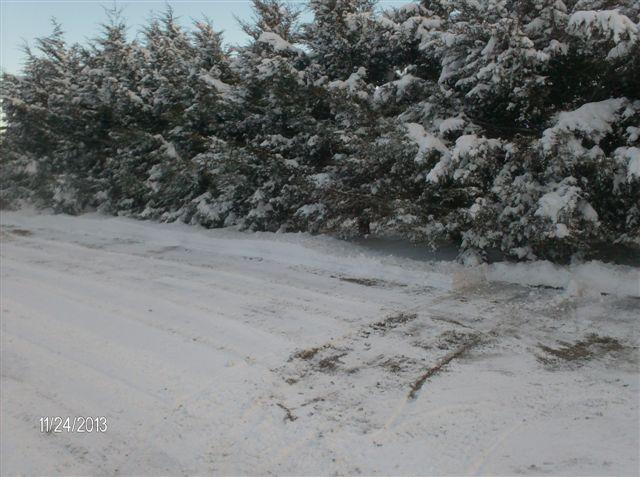 snow012.jpg
