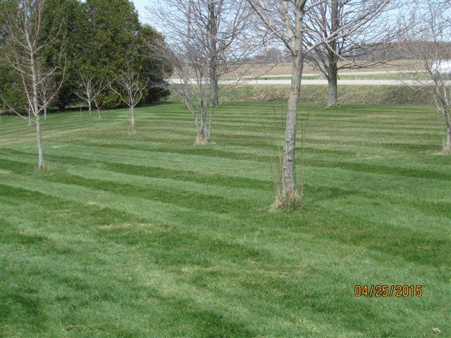 stripes6.jpg