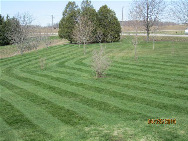 stripes8.jpg