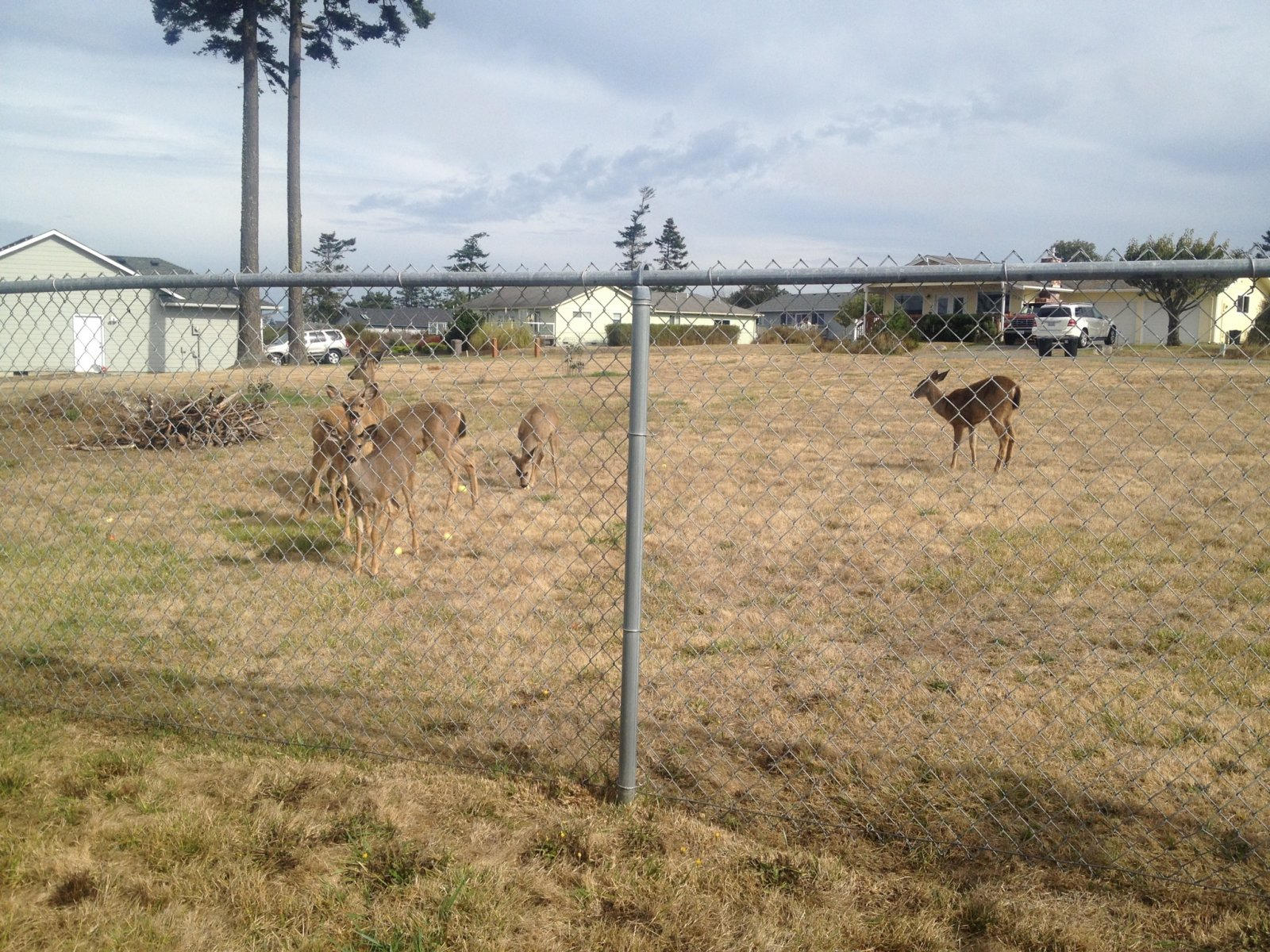 The local deer seem to like it
